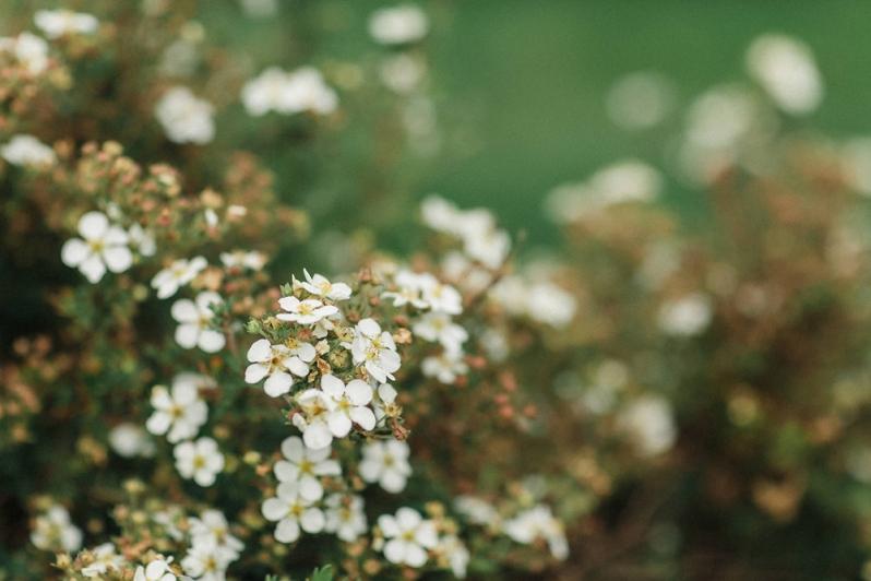 Hochzeit, Sommer, Blumen